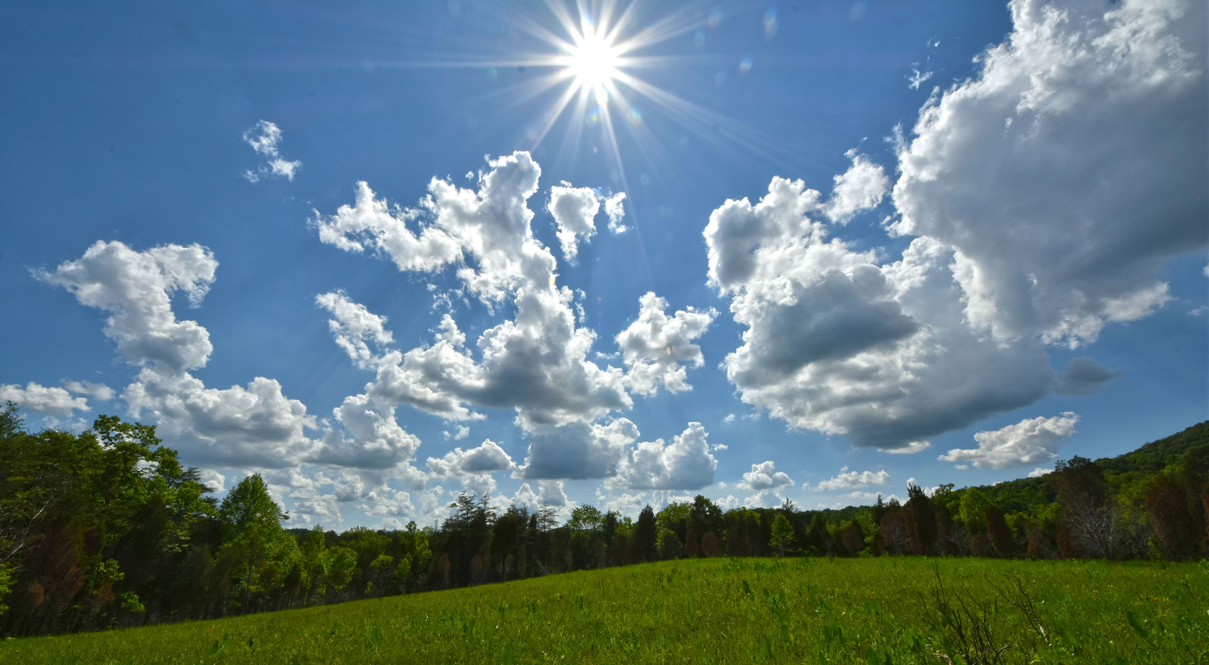 A bright sun shines down on an open grassy field lined by trees in summer.
