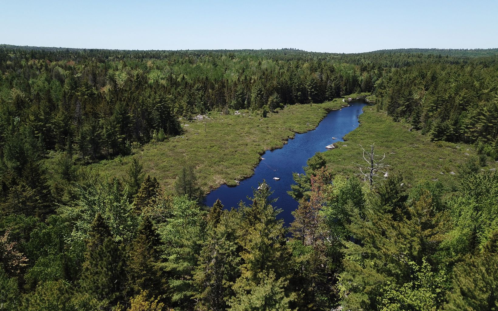 aerial view of stream and wetlands surrounded by forest