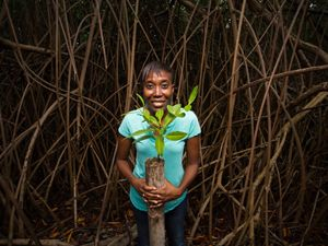 TNC team member holds red mangrove seedling.