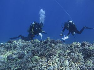 Divers conduct a coral bleaching survey on West Hawai'i Island.
