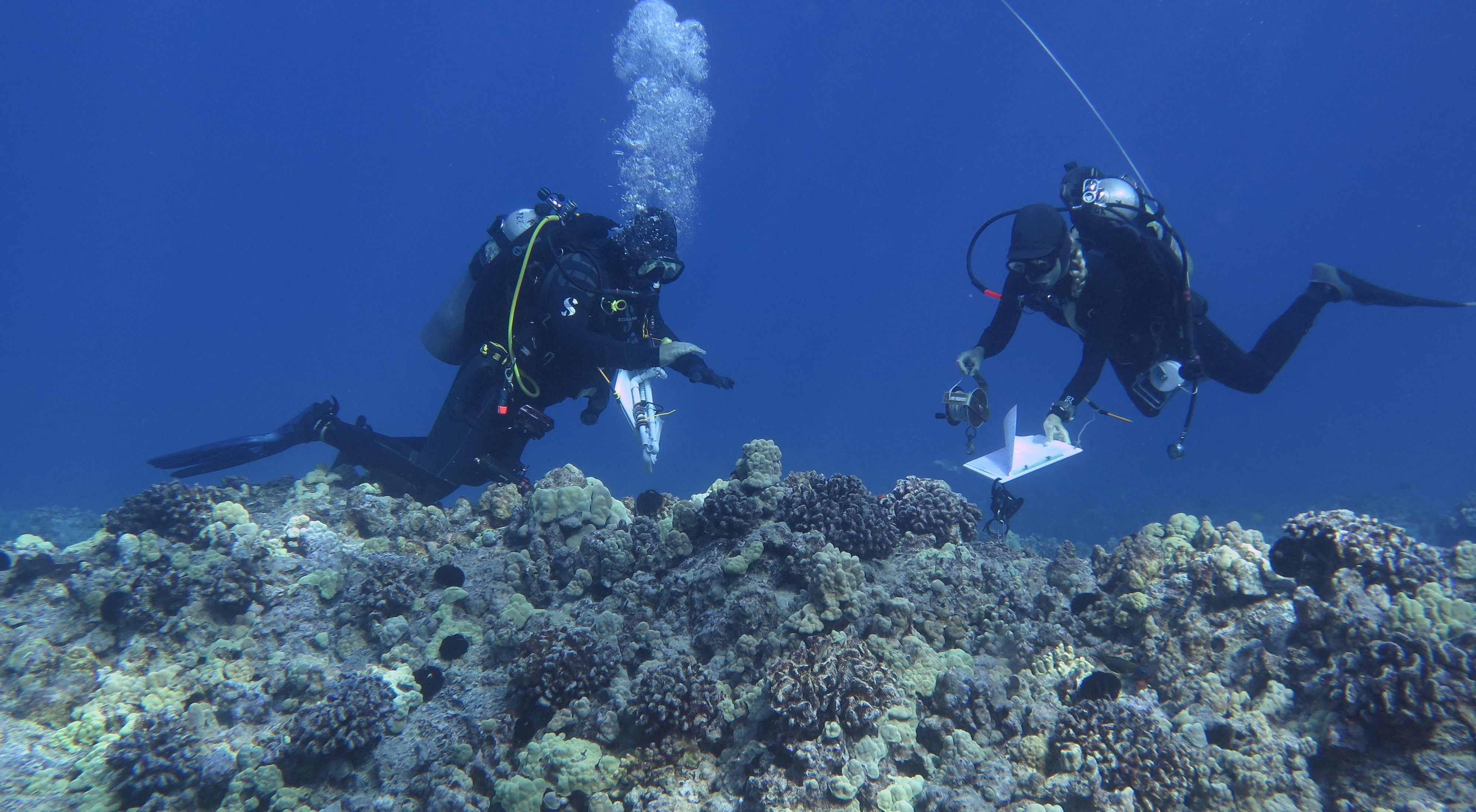 Two SCUBA divers with clipboards studying a Hawaiian coral reef.