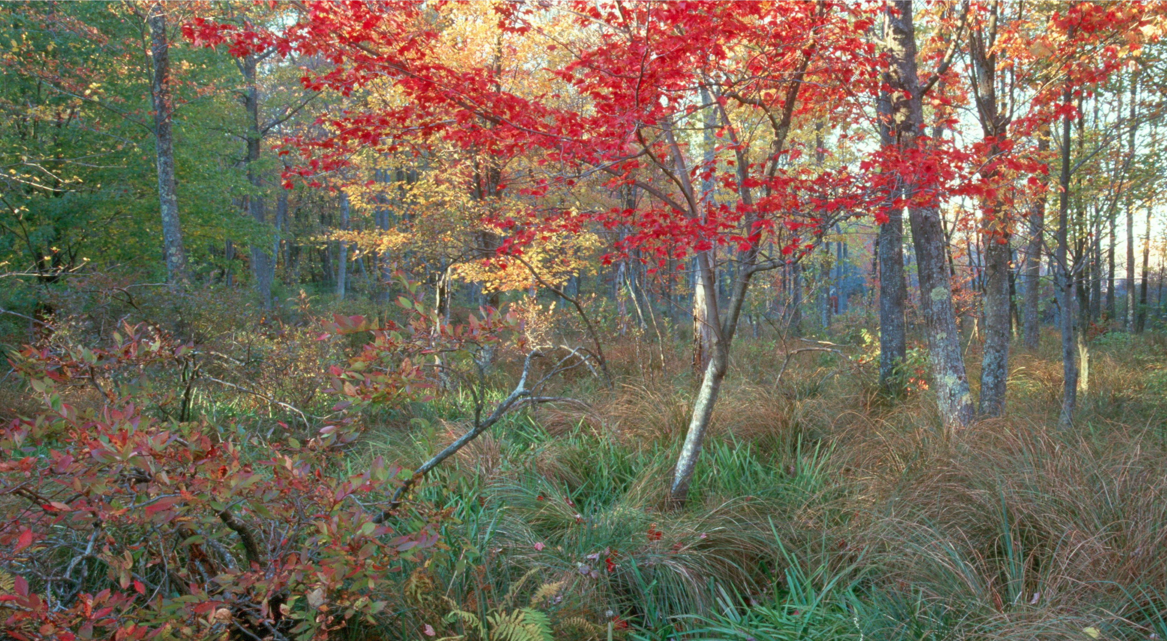 1,000-acre Mashipacong Bogs Preserve borders both High Point and Stokes state parks in New Jersey.