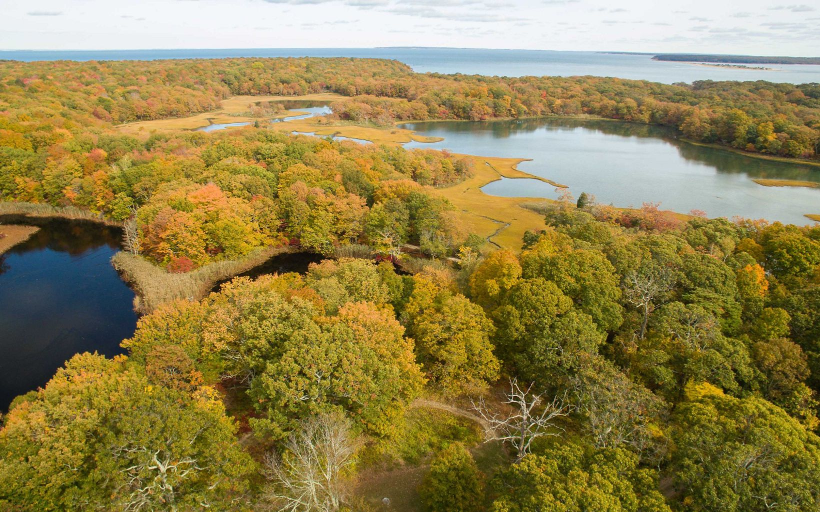 Aerial view of trees in fall color along the shore of several small ponds or lagoons with a broader shoreline in the distance.