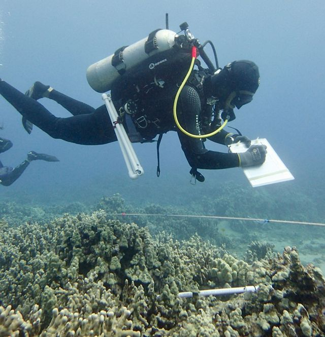 A SCUBA diver underwater over a coral reef, writing on an underwater clipboard.