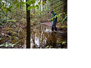 Surveying a Southern Appalachian Mountain Bog in Western North Carolina.