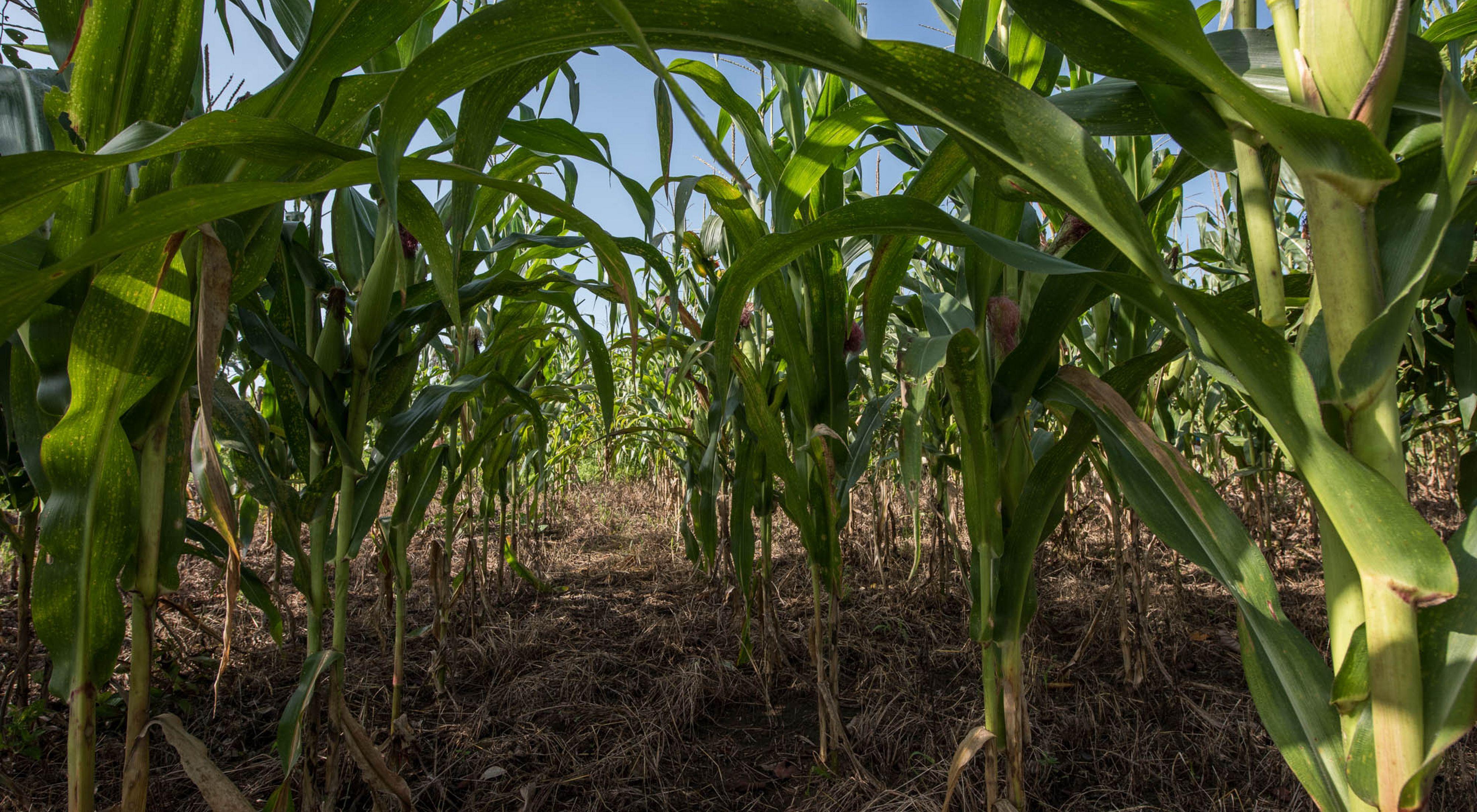 Agricultura chiapas