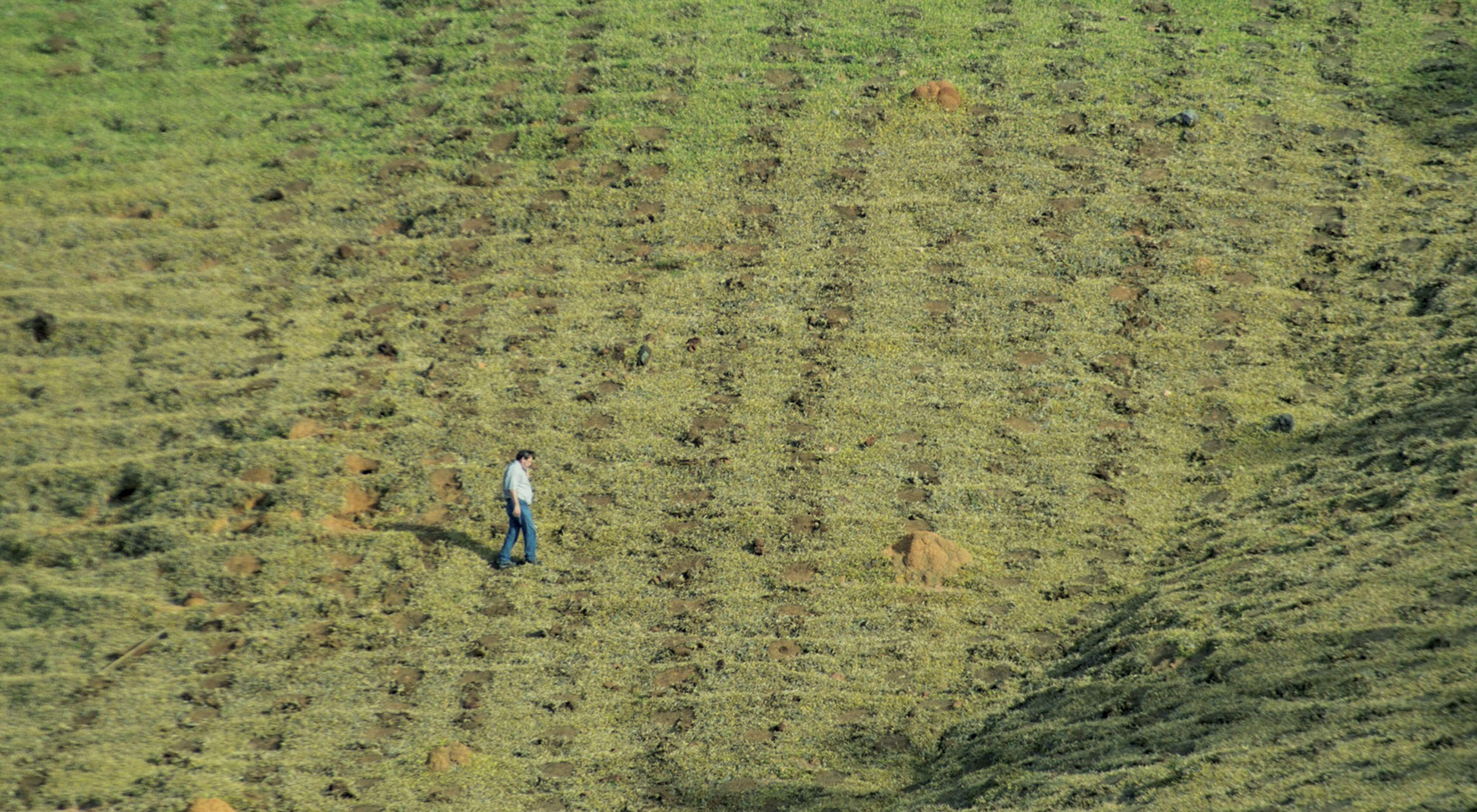 Arlindo Cortez, gerente del Programa Productor de Agua de Extrema, camina a lo largo de una colina que ha sido preparada para la reforestación en la Sierra de Mantiqueira
