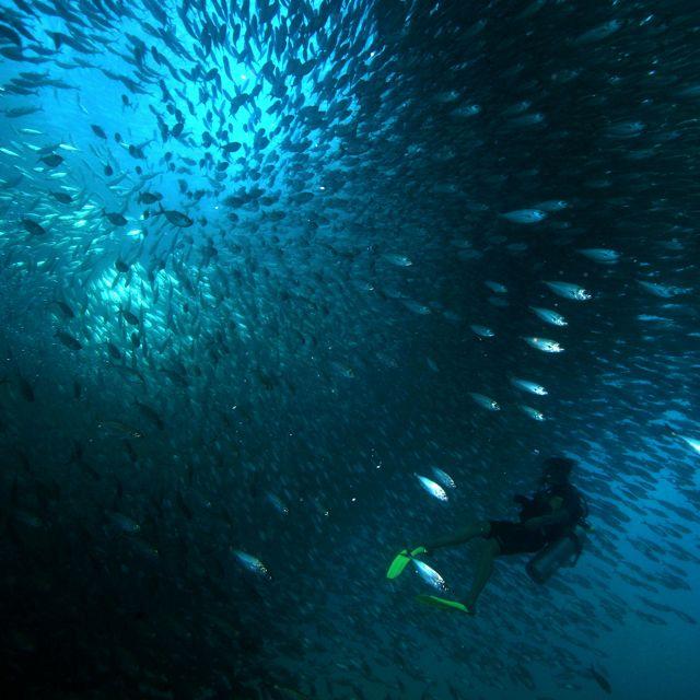 Sumergidos en el corazón de una escuela de sardinas frente a la Isla Cerralvo en el Golfo de California en México. The Nature Conservancy está trabajando en la región de Baja California para proteger la vida silvestre y el hábitat pesquero y fortalecer una red de áreas marinas protegidas.