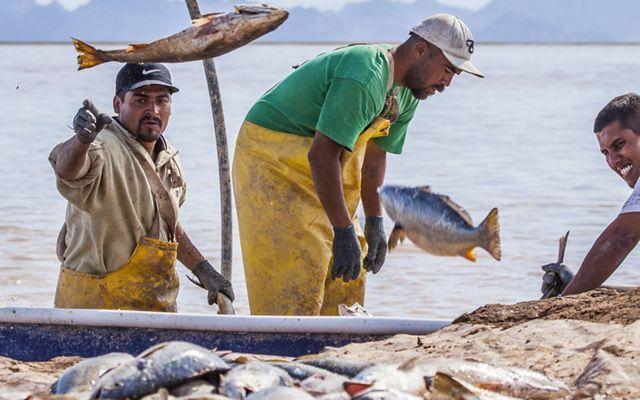 Pesquerías Sostenibles