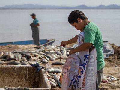 Pesquería Locales