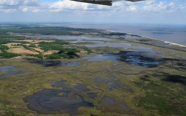 Aerial view looking down on tidal marshlands adjacent to the Delaware Bay. Large patches of open water wind through green wetlands next to tall stands of coastal forest.