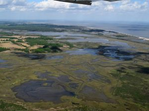 Aerial view looking down on tidal marshlands. Creeks and channels wind through the wetlands. A thin strip of beach provides a buffer from the ocean.