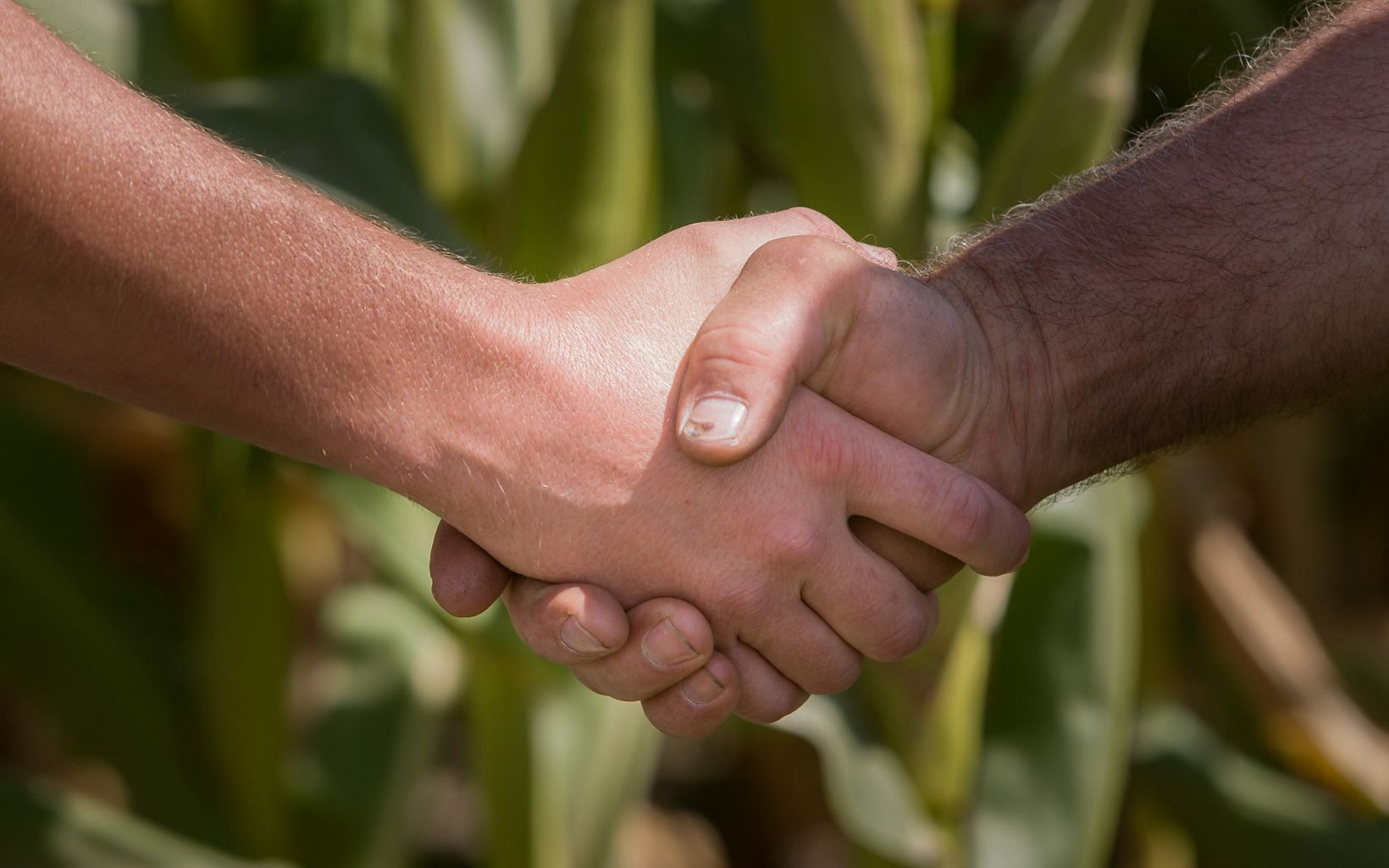 Saginaw Bay Watershed Agriculture, farmer and watershed  technician shake hands.