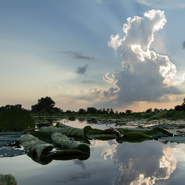 Sky with clouds reflected on water with green lily pads.