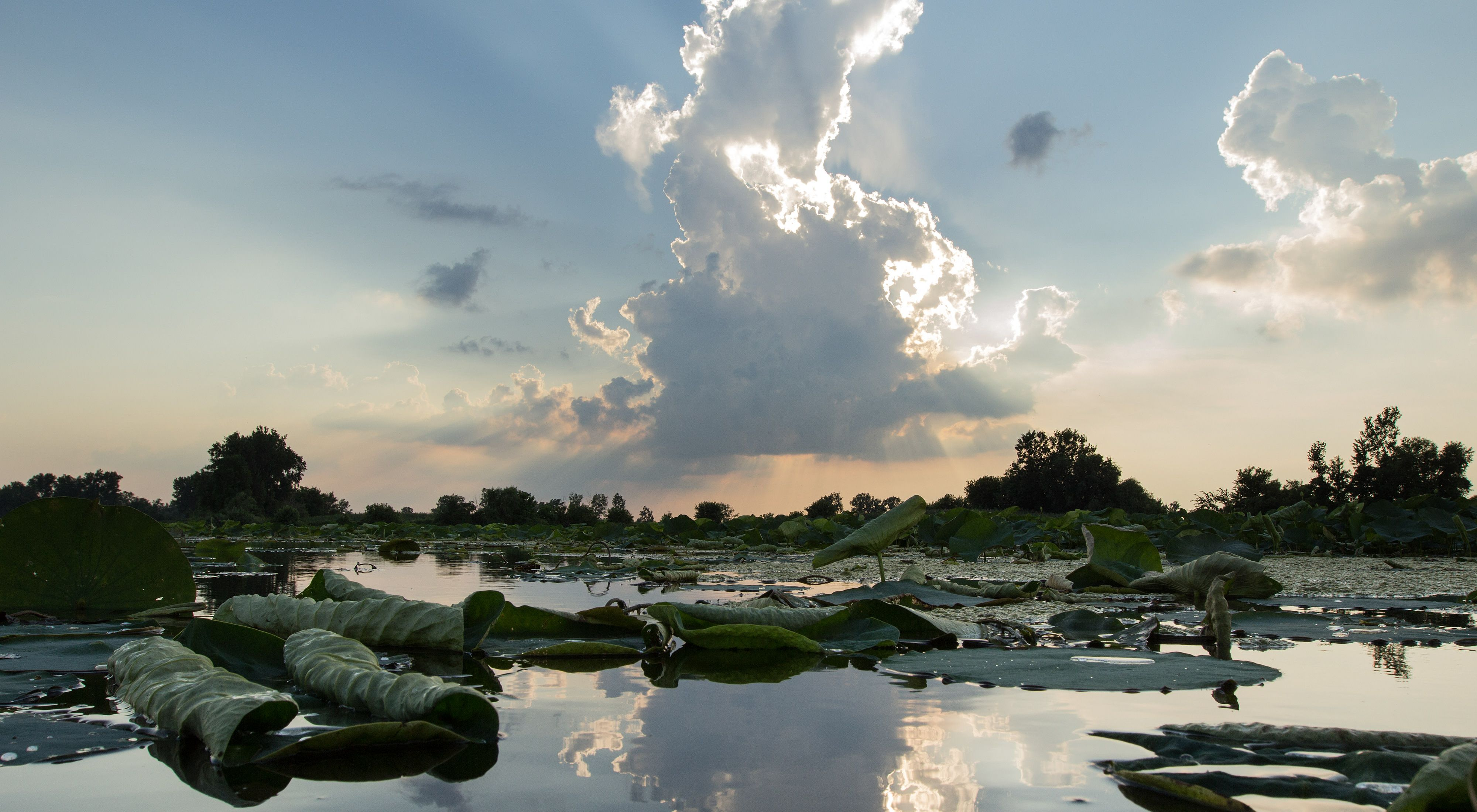 Sun rays shine behind clouds reflect off of water in one of the wetland areas of Erie Marsh Preserve.