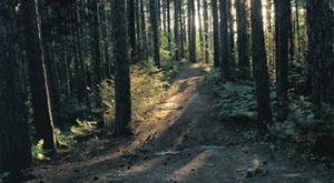 Northern Great Lakes Forest Project