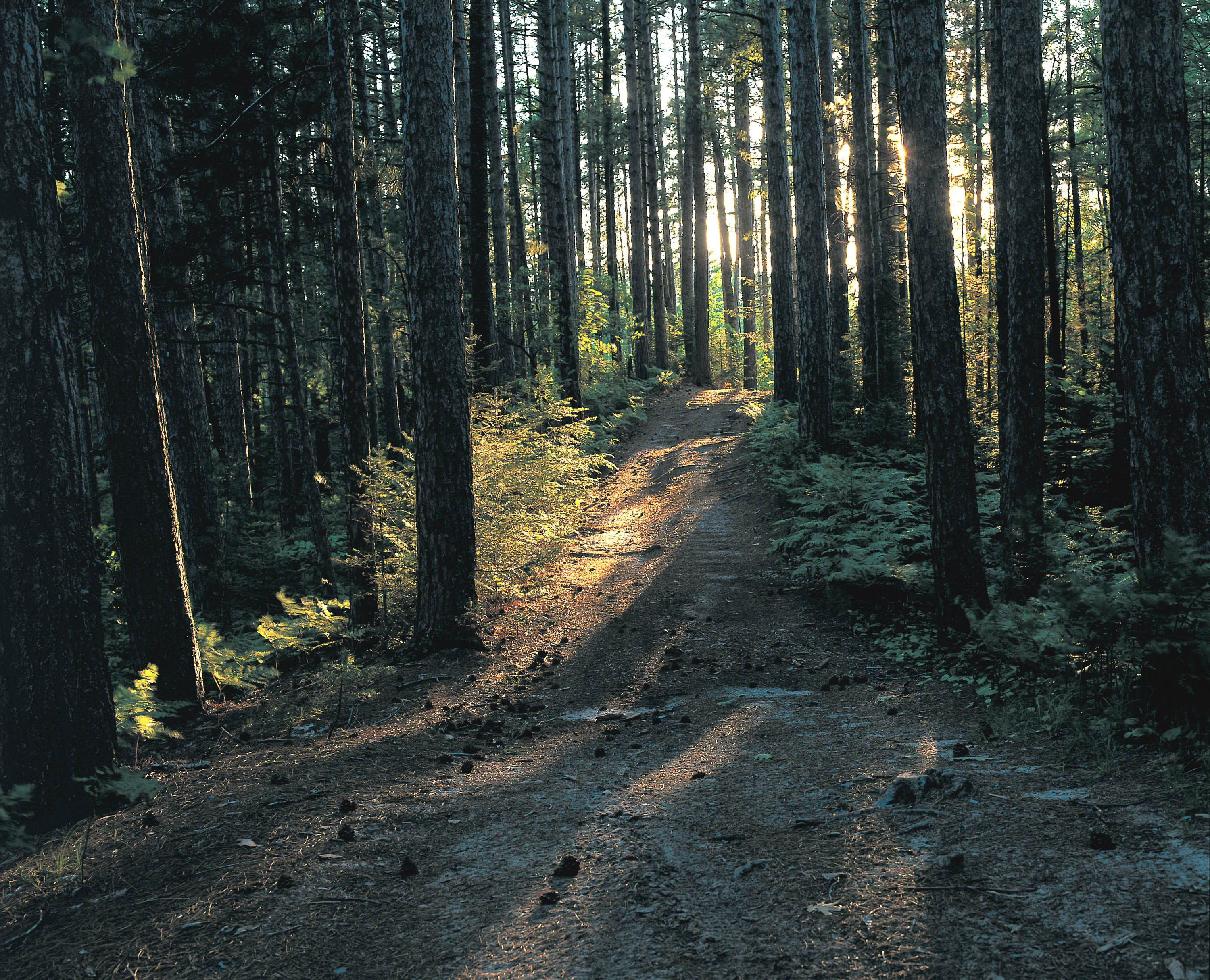 The light peeks through the trees and lights a dirt trail.