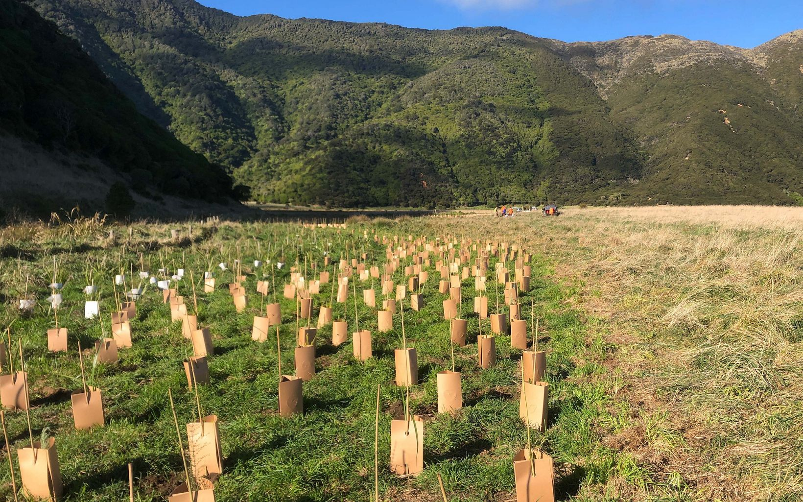 and resilience are protected and restored. Tree planting to restore Moawhitu.