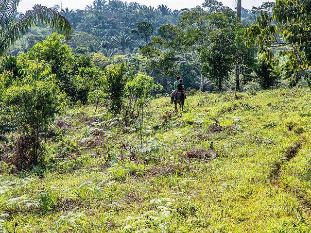 El territorio muestra escenas de deforestación cada vez más frecuentes, que contrastan con la exuberancia natural de la selva.