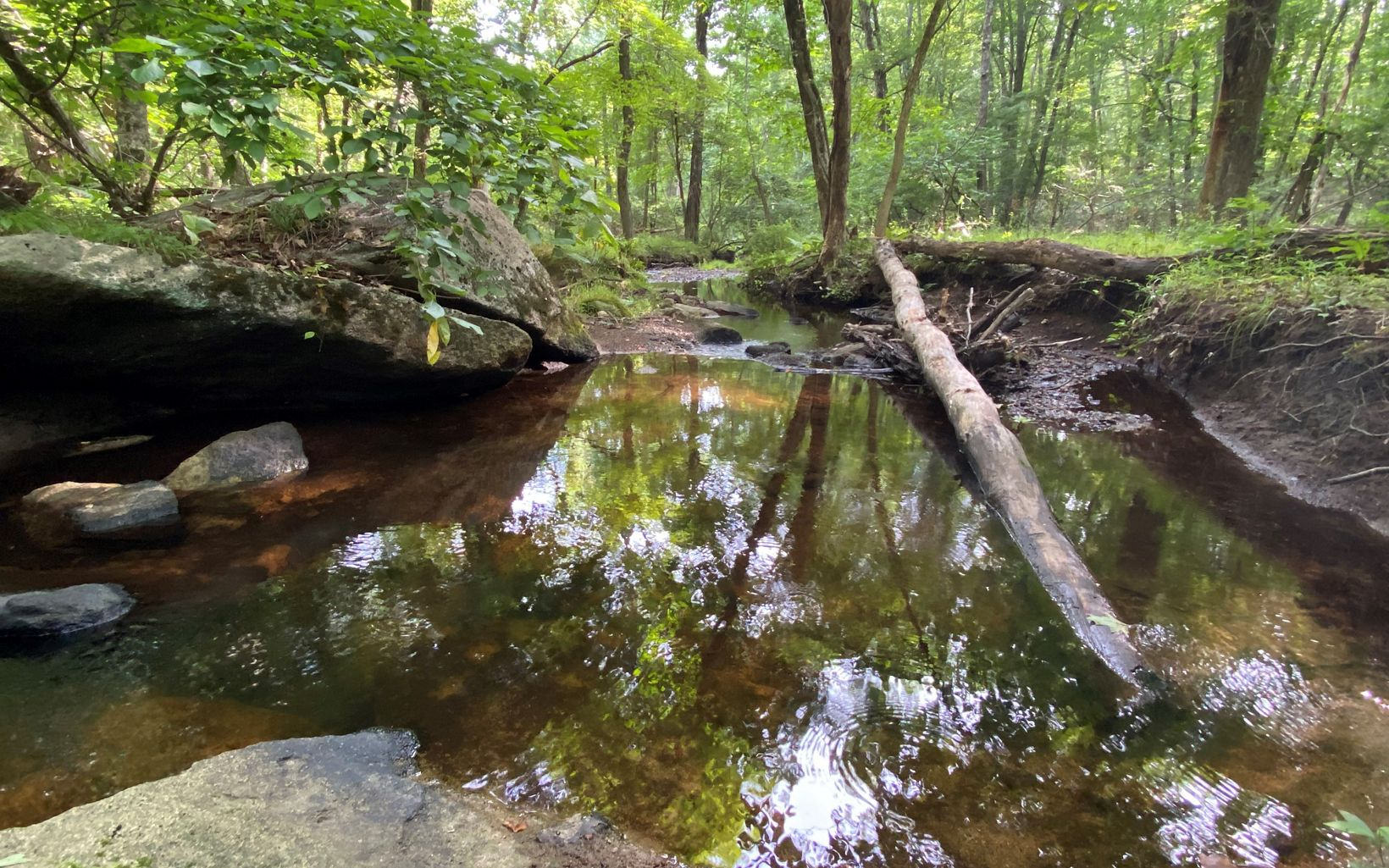 Sunlight reflects off a small pool in a slowly flowing stream under a summer forest canopy.