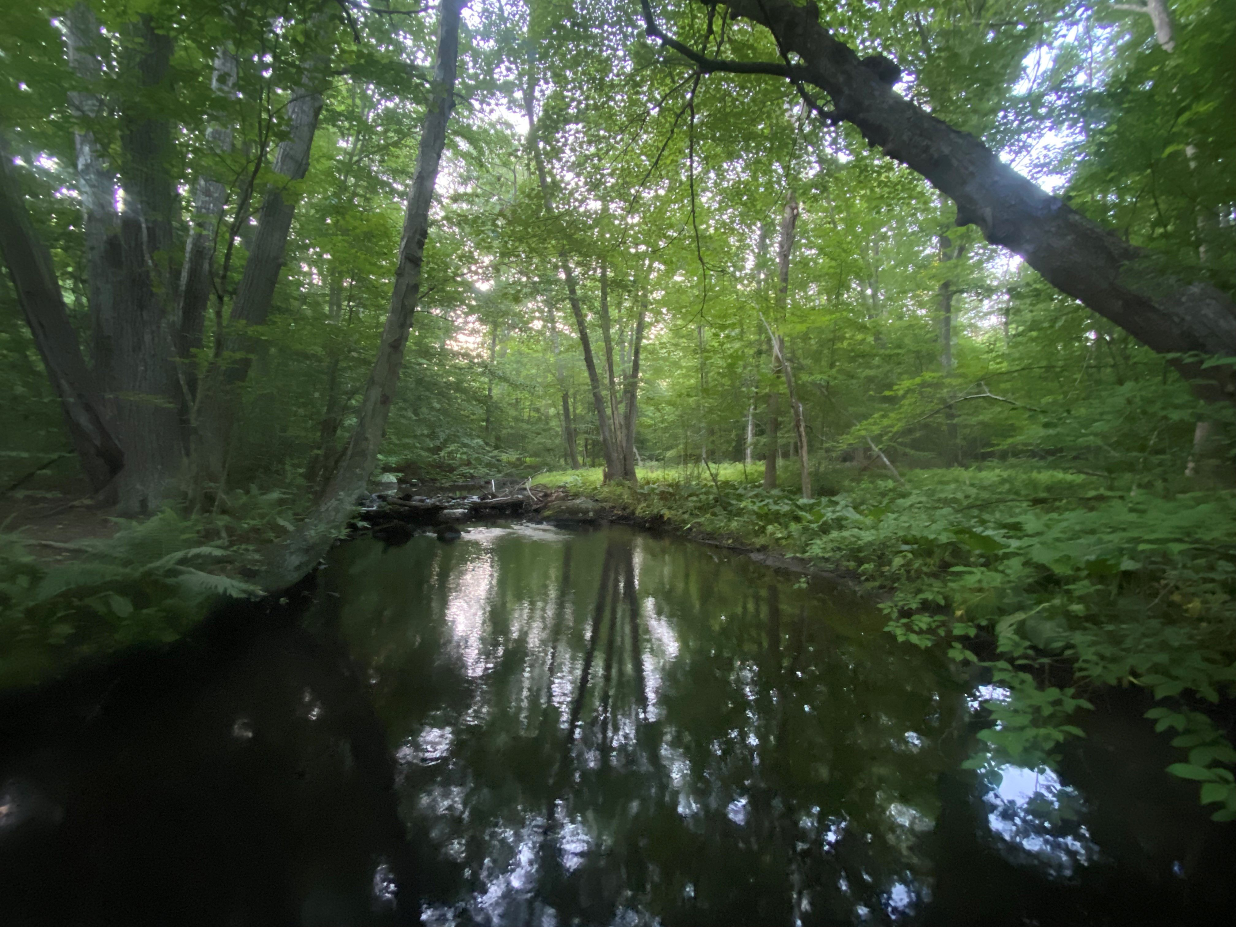 At dusk, the dark surface of a small river reflects the tree canopy above. A cluster of large red maples stands on the left bank.