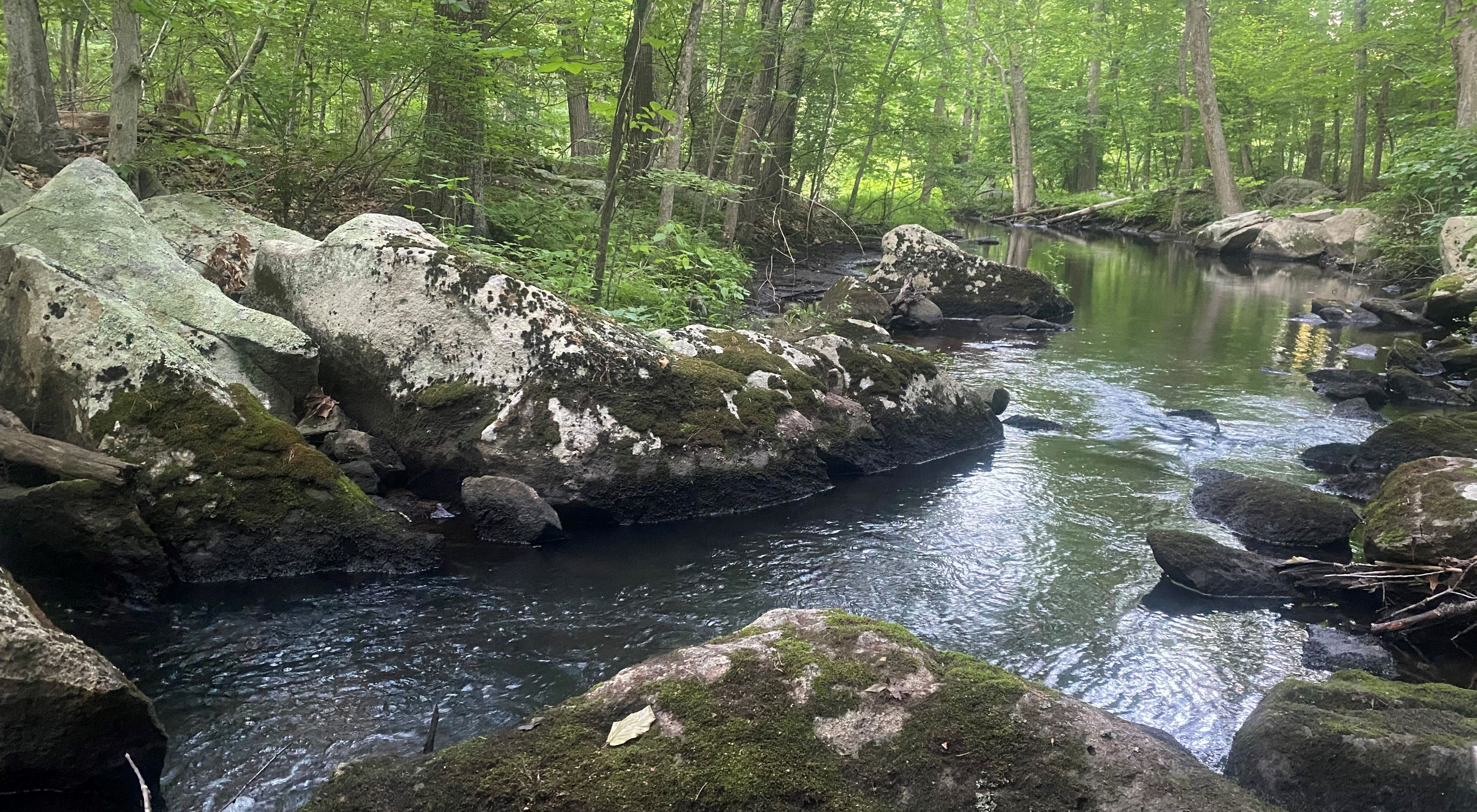 A small river flows under a green forest canopy. Gray granite boulders line both banks.