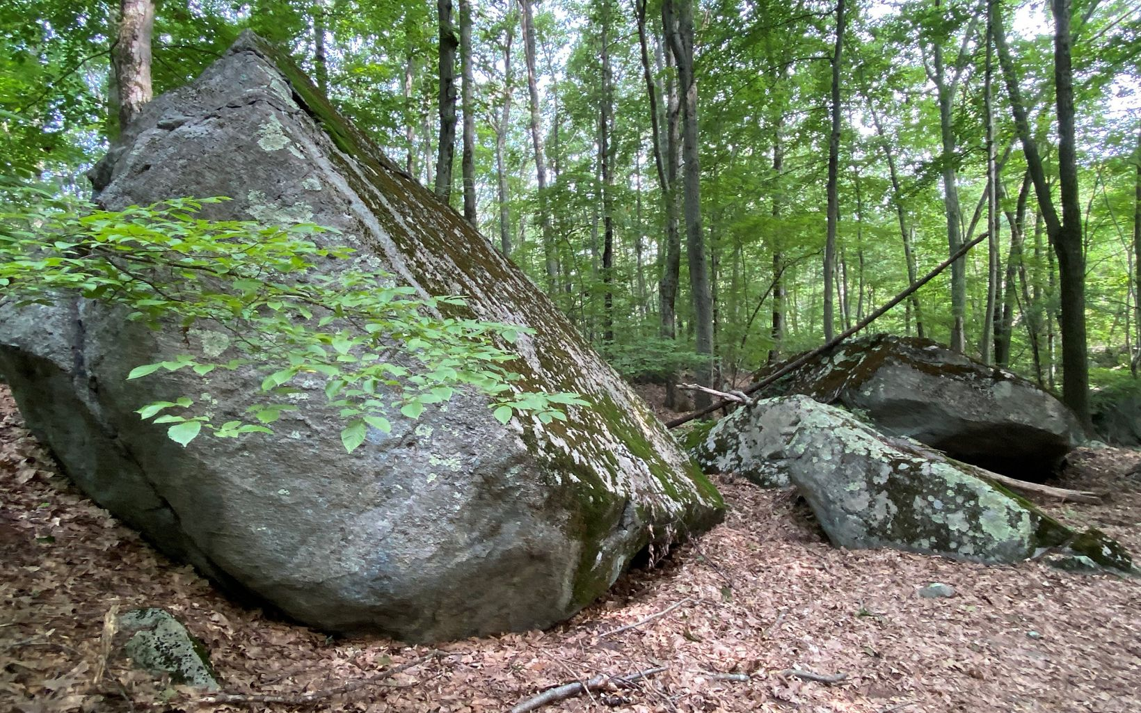 A large granite boulder, flat on the right side, is surrounded by young forest in summertime, with smaller boulders in the background.