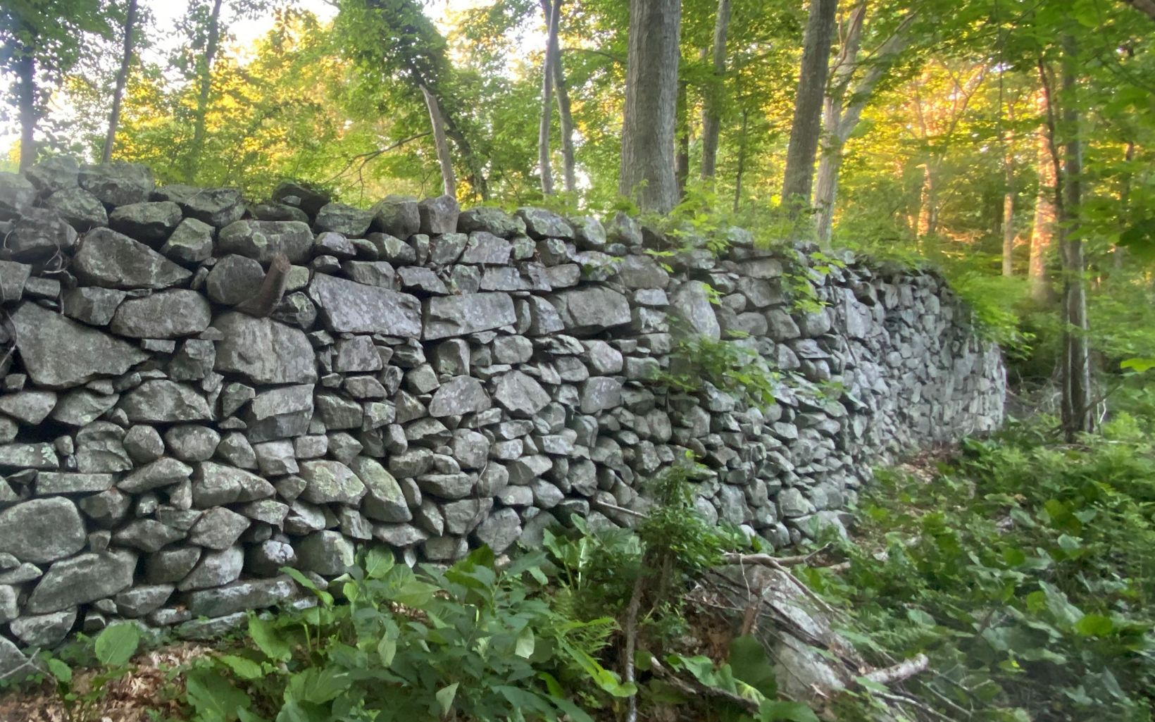 An 8-foot-tall historic dam made of field stones, surrounded by young forest.