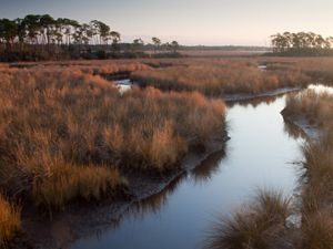 Mississippi coastal stream and marsh at sundown