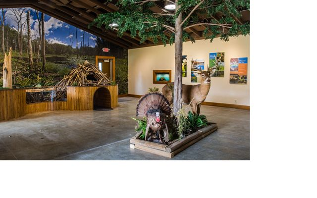 Looking inside the nature center: taxidermy turkey, deer and beaver with beaver dam, trees and nature photos on the wall.