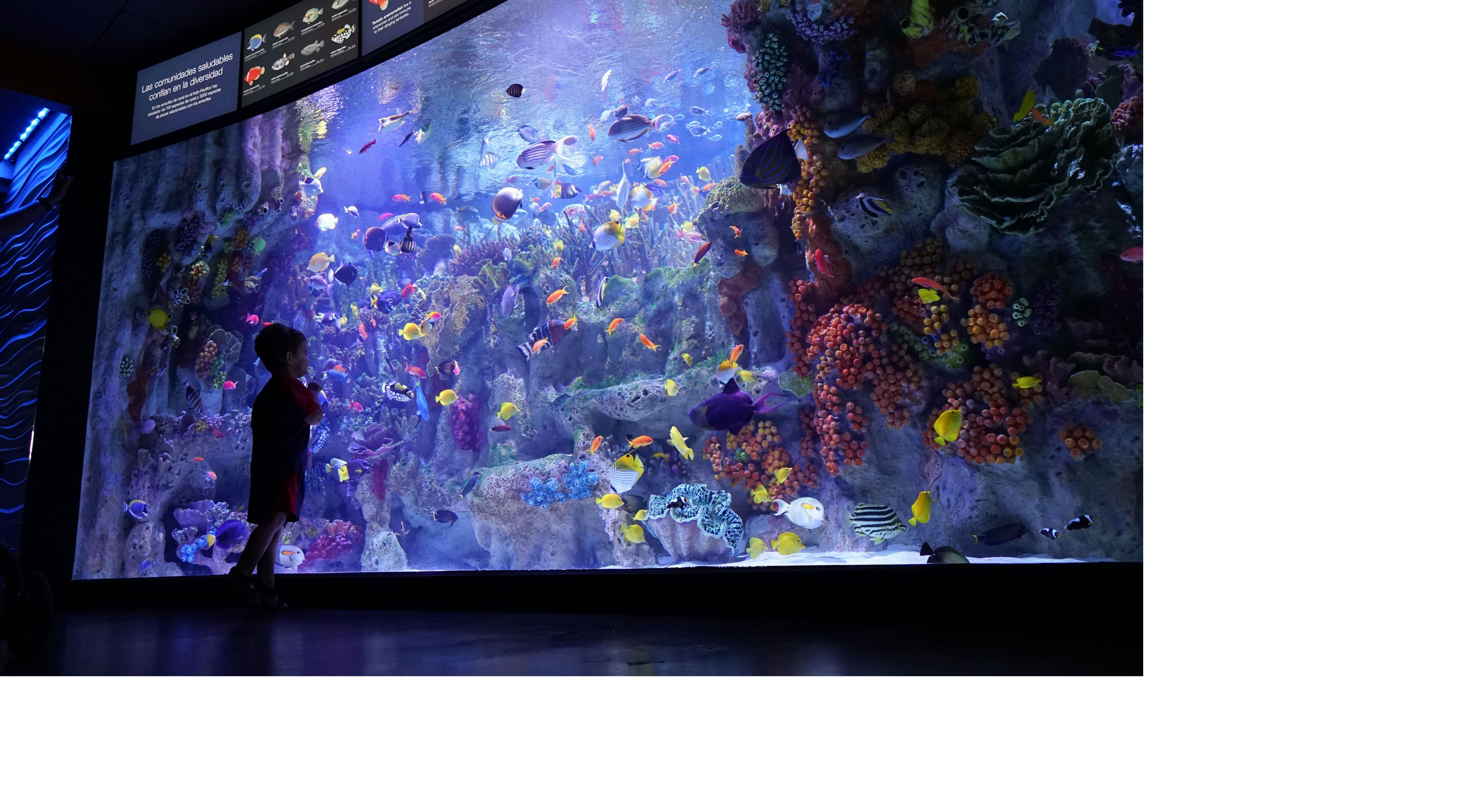 Silhouette of a child in front of a large aquarium fish tank filled with colorful fish and corals.
