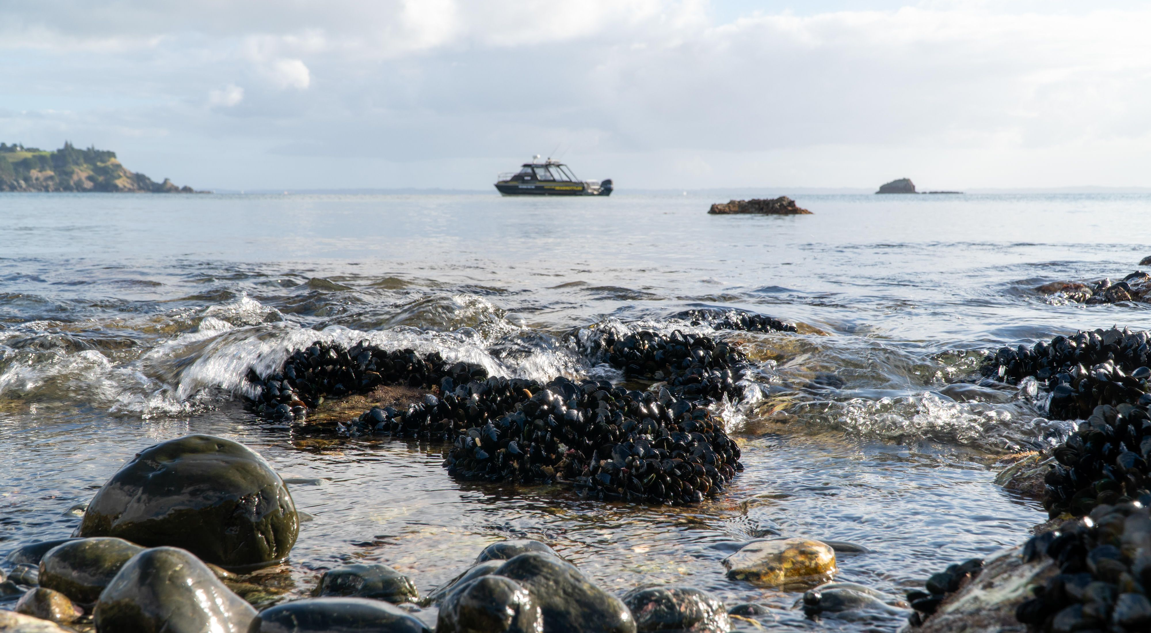 As the tide comes in, mussels escape from the oystercatchers for a time. Beyond the mussel beds our ride waits to collect us.