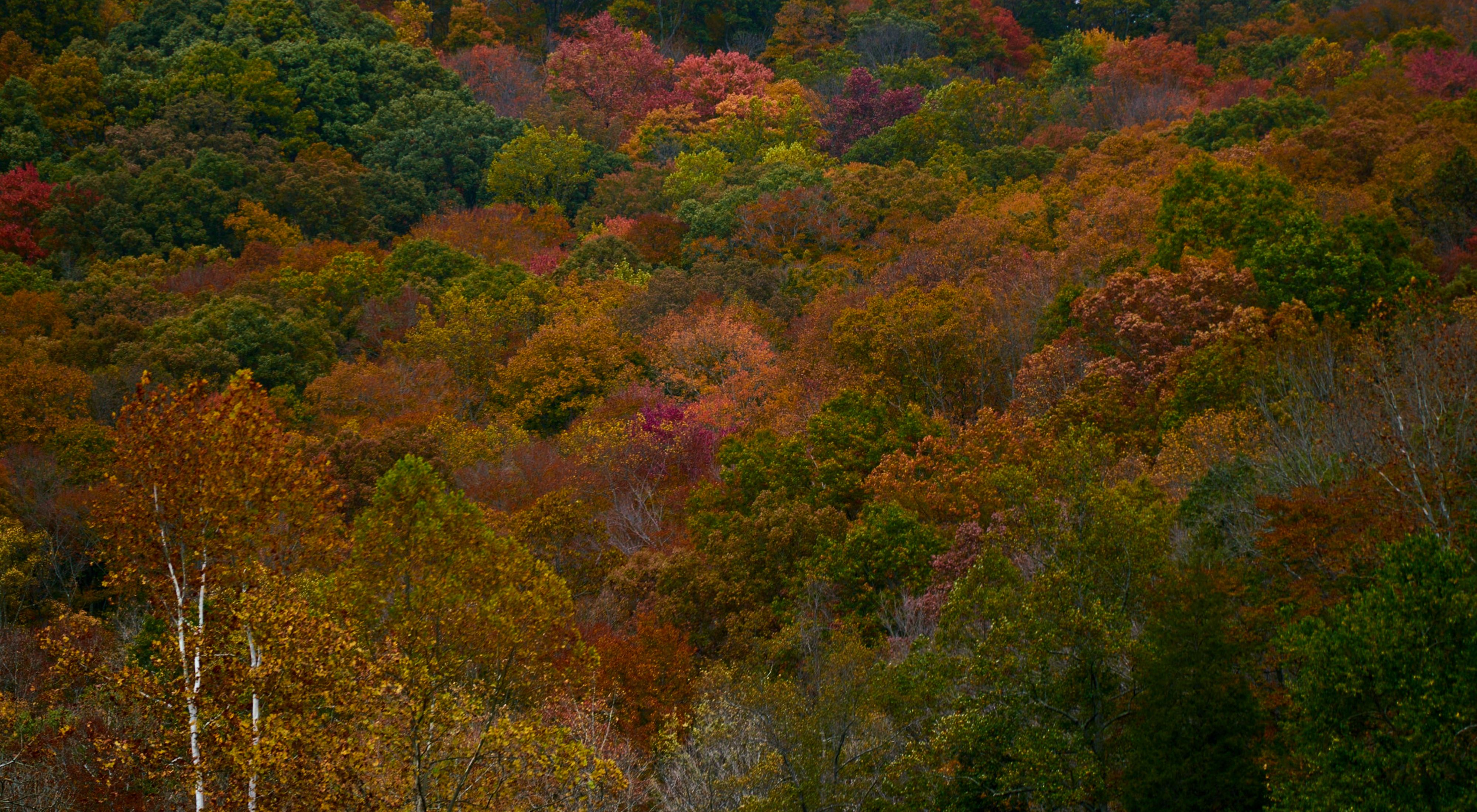 Scenery from forests in Ohio.