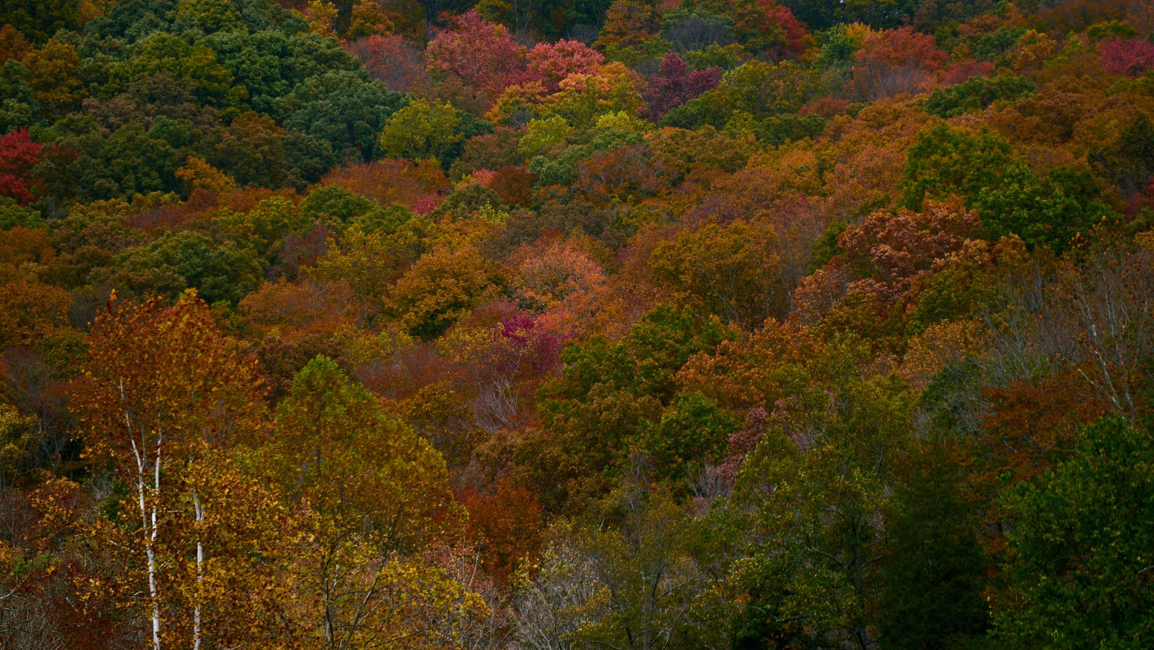 Autumn scene of forest showing red, orange, and yellow fall colors