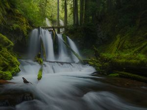 Flowing water is a white blur as it spills over fallen logs in the middle of a dark green forest.
