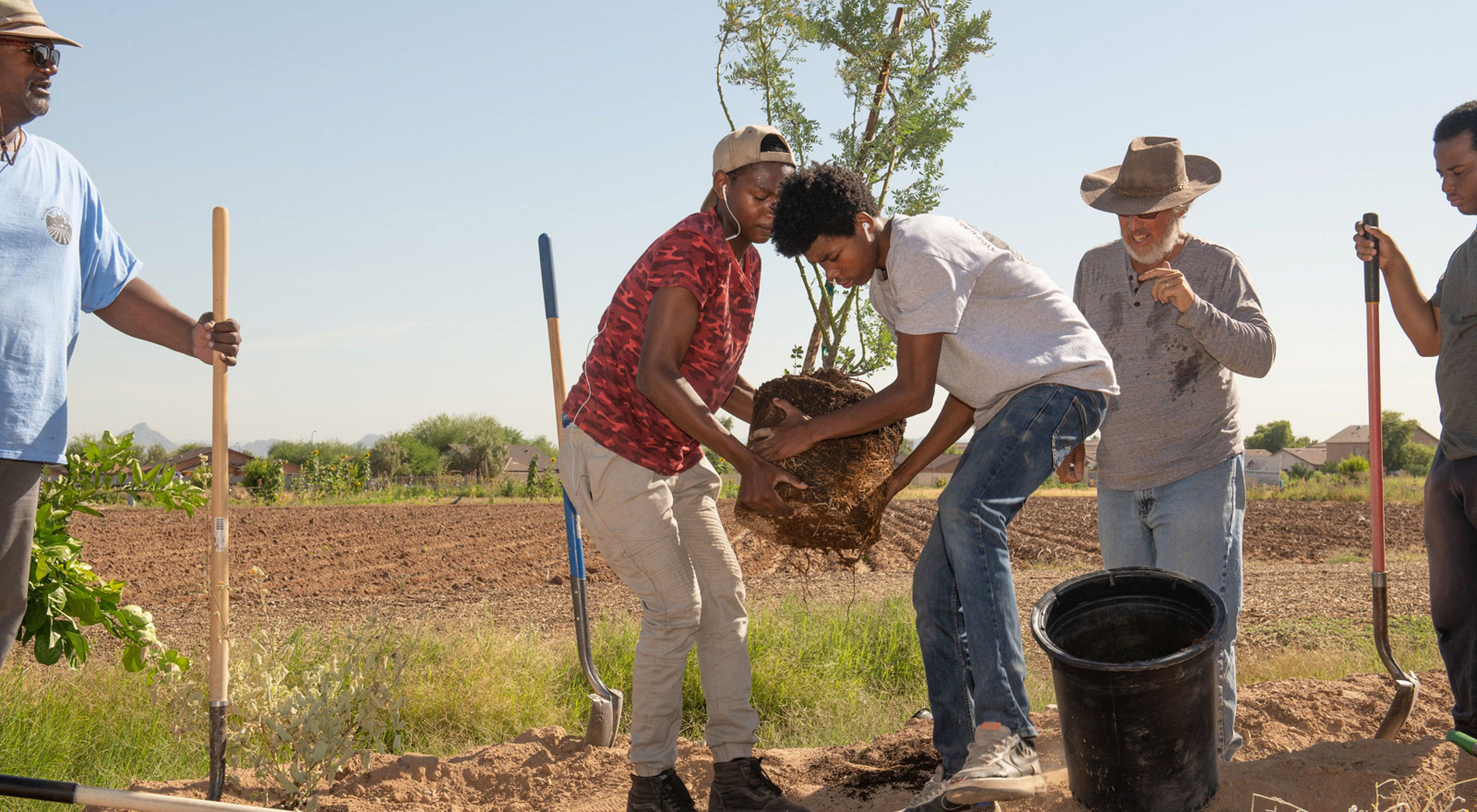 Two volunteers place a small tree into a hole in an arid landscape.