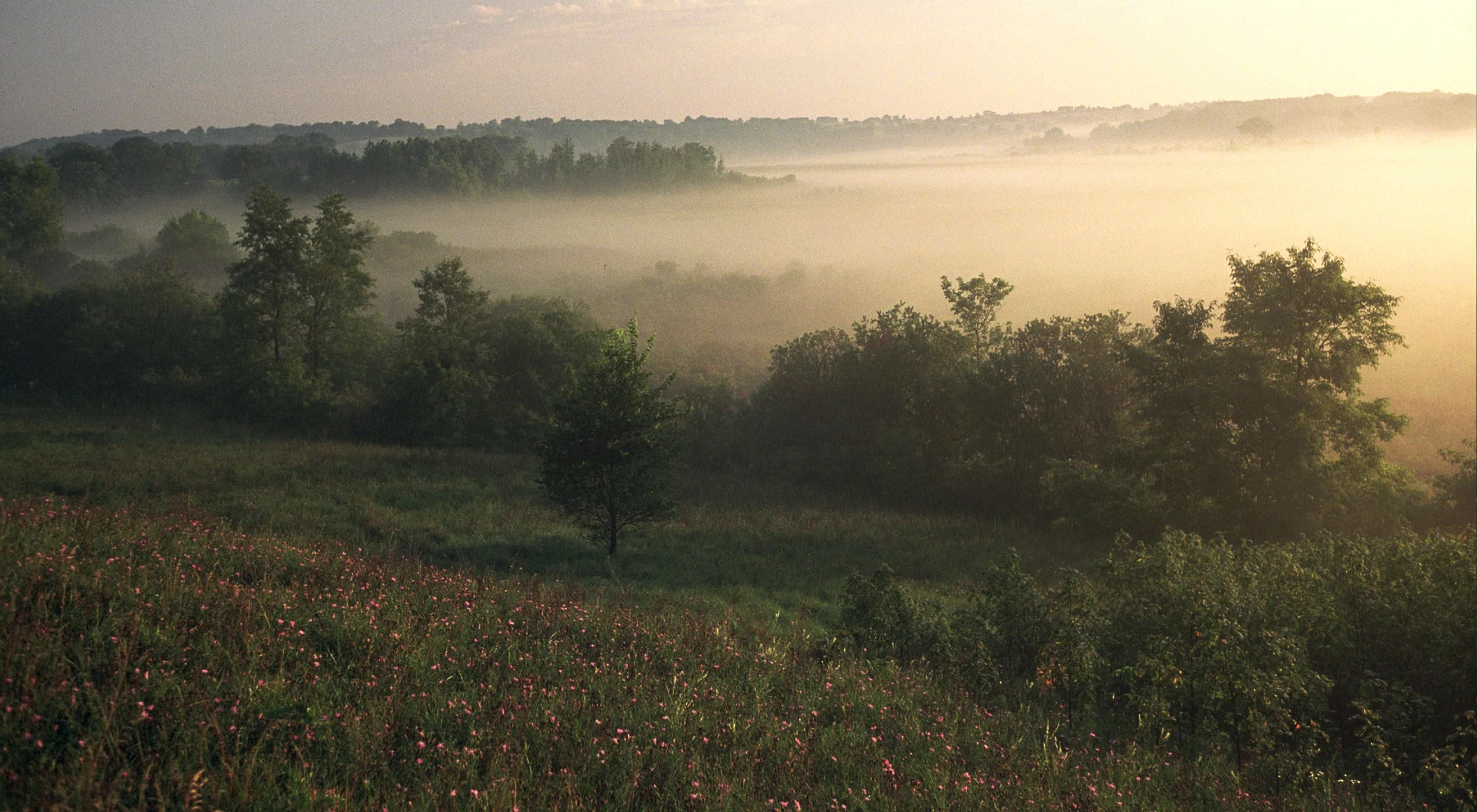 Foggy rolling in over the fen, with wildflowers and trees in the foreground.