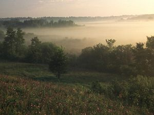 Mist layers over a forested fen during sunrise.