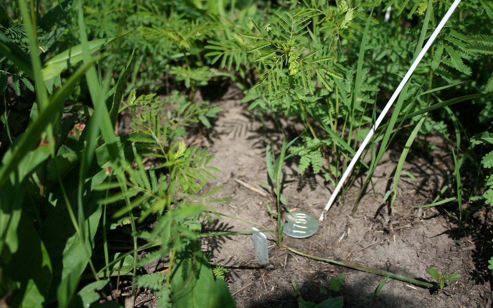 Metal tags and plastic stakes mark individual plants and patches of soil being monitored by scientists from the Kansas Biological Survey.