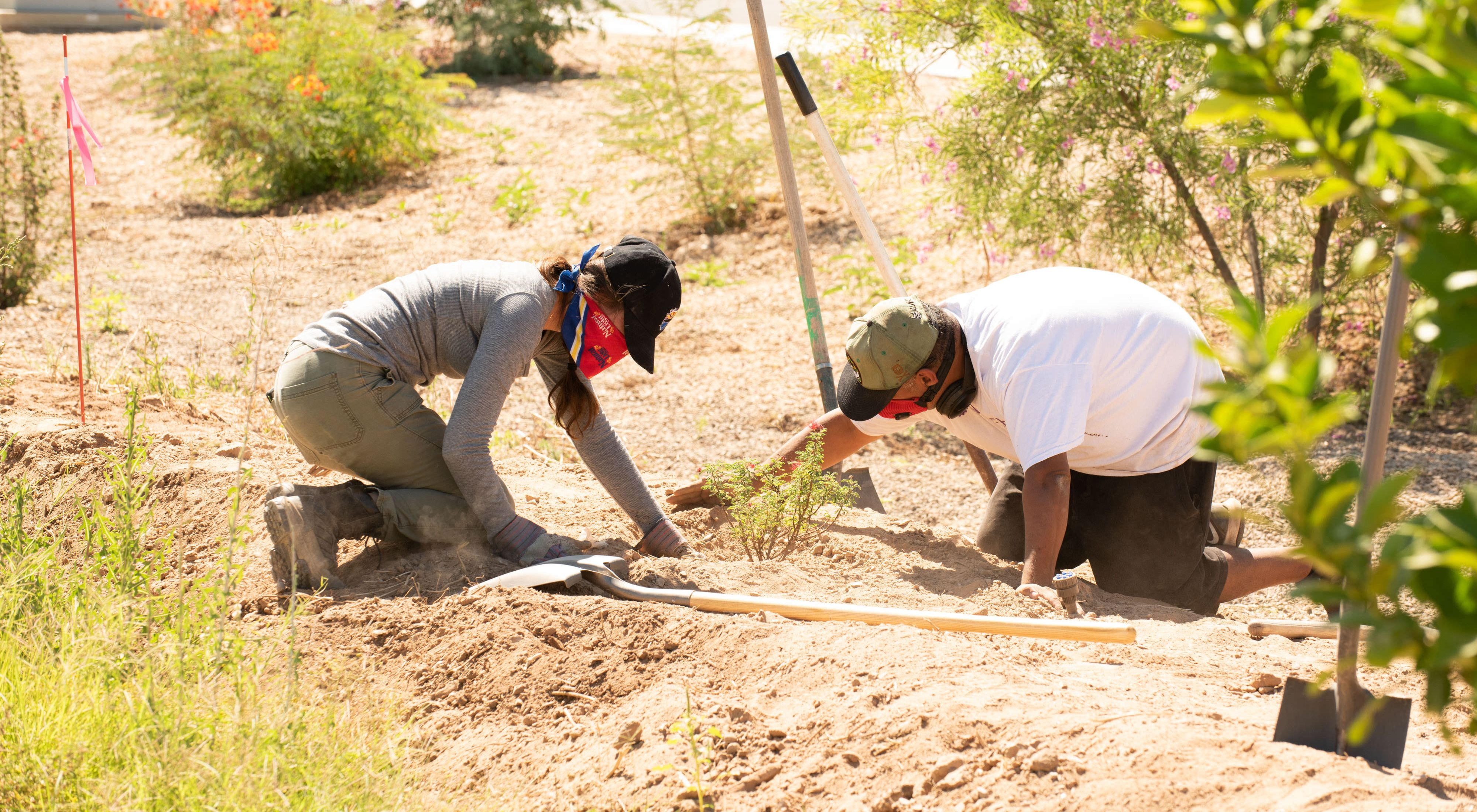 Two volunteers in Phoenix wearing masks and kneeling to plant a small shrub.
