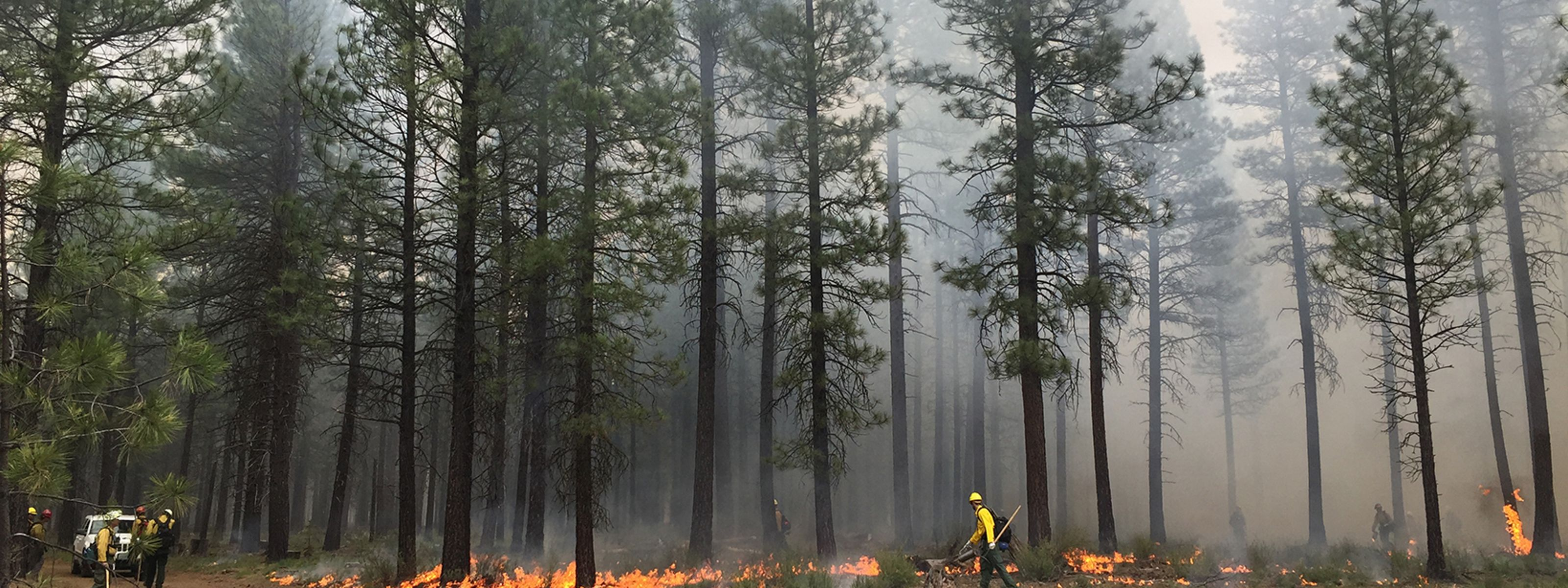 Planned fires pave the way for safer communities and fire-adapted ecosystems restored to a healthier, more resilient condition.