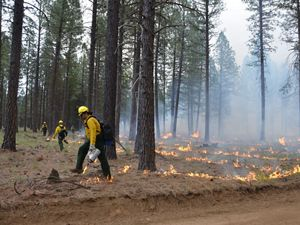 Fire staff in safety gear starting a controlled burn in a forest.