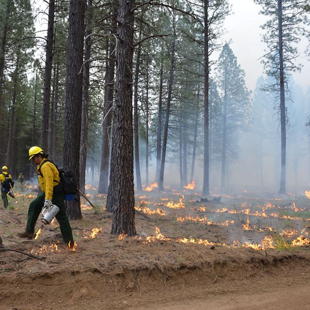 Fire practitioners facilitate a controlled burn
