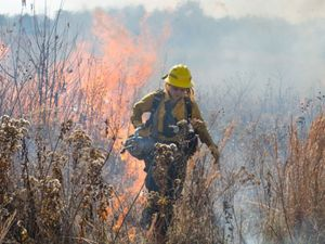 Prescribed fire is used across the state to improve habitat for wildlife like quail, turkey, and deer.