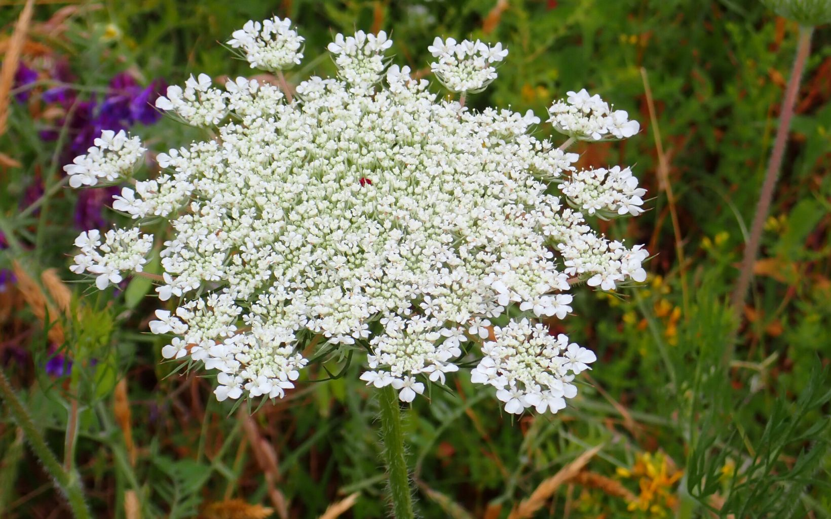 A cluster of tiny white flowers.