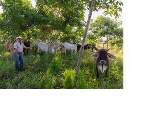 "Rancher Jose Palomo stands under the shade trees in his ""silvopastoral"" pasture at his ranch Los Potrillos in Becanchen, Yucatan, Mexico. Palomo has adopted ""silvopastoral"" ranching practices, which increases cattle yields through a mixed grass/shrub/tree ecosystem. The shade lessens stress of tropical sun and helps cattle gain and keep weight. The Nature Conservancy works with landowners, communities, and governments in Mexico to promote low-carbon rural development through the design and implementation of improved policy and practice in agriculture, ranching, and forestry. The Conservancy is leading the initiative, Mexico REDD+ Program in conjunction with the Rainforest Alliance, the Woods Hole Research Center, and Espacios Naturales y Desarrollo Sustentable."