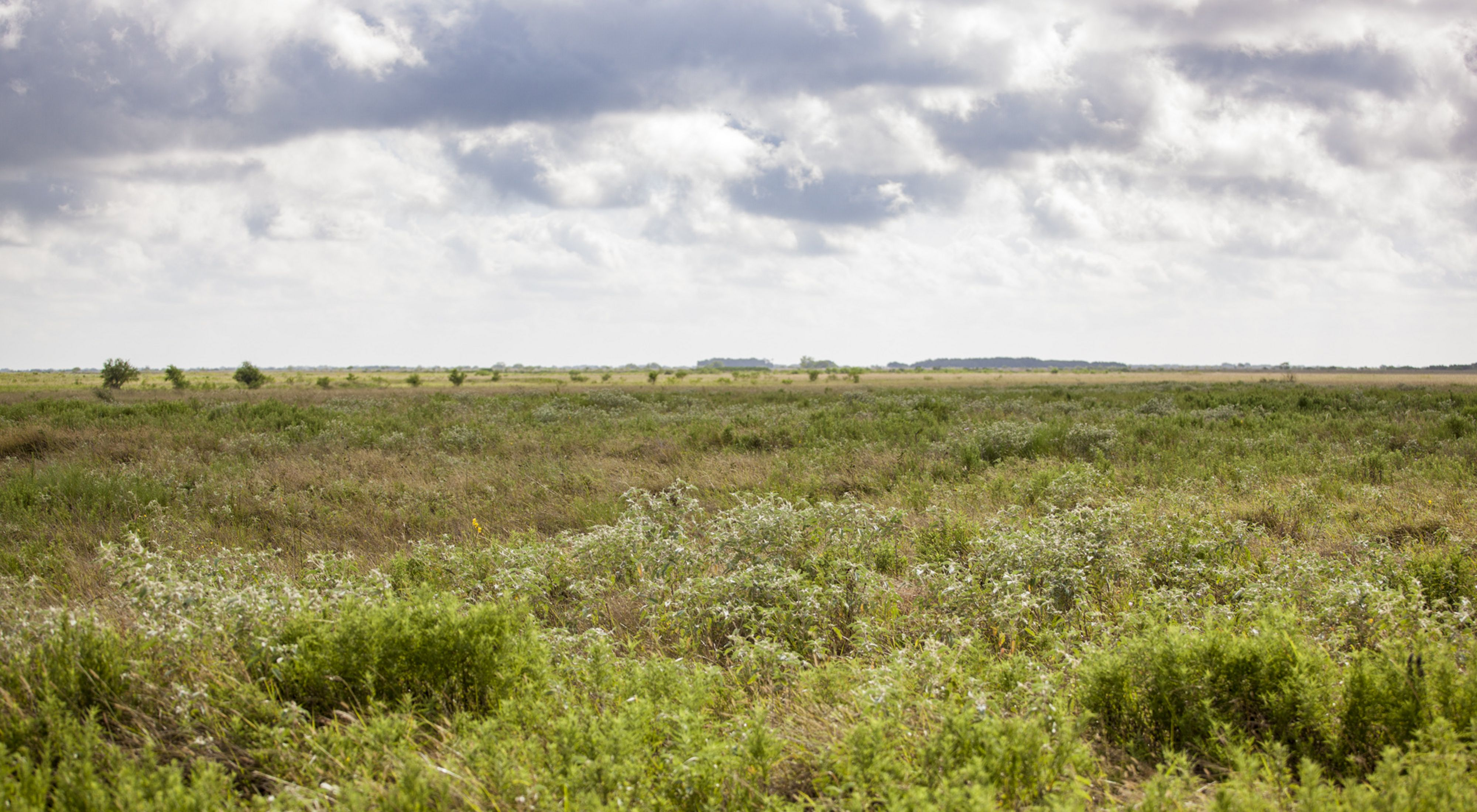 The Refugio-Goliad Project contains one of the highest-quality expanses of native coastal tallgrass prairie in Texas.