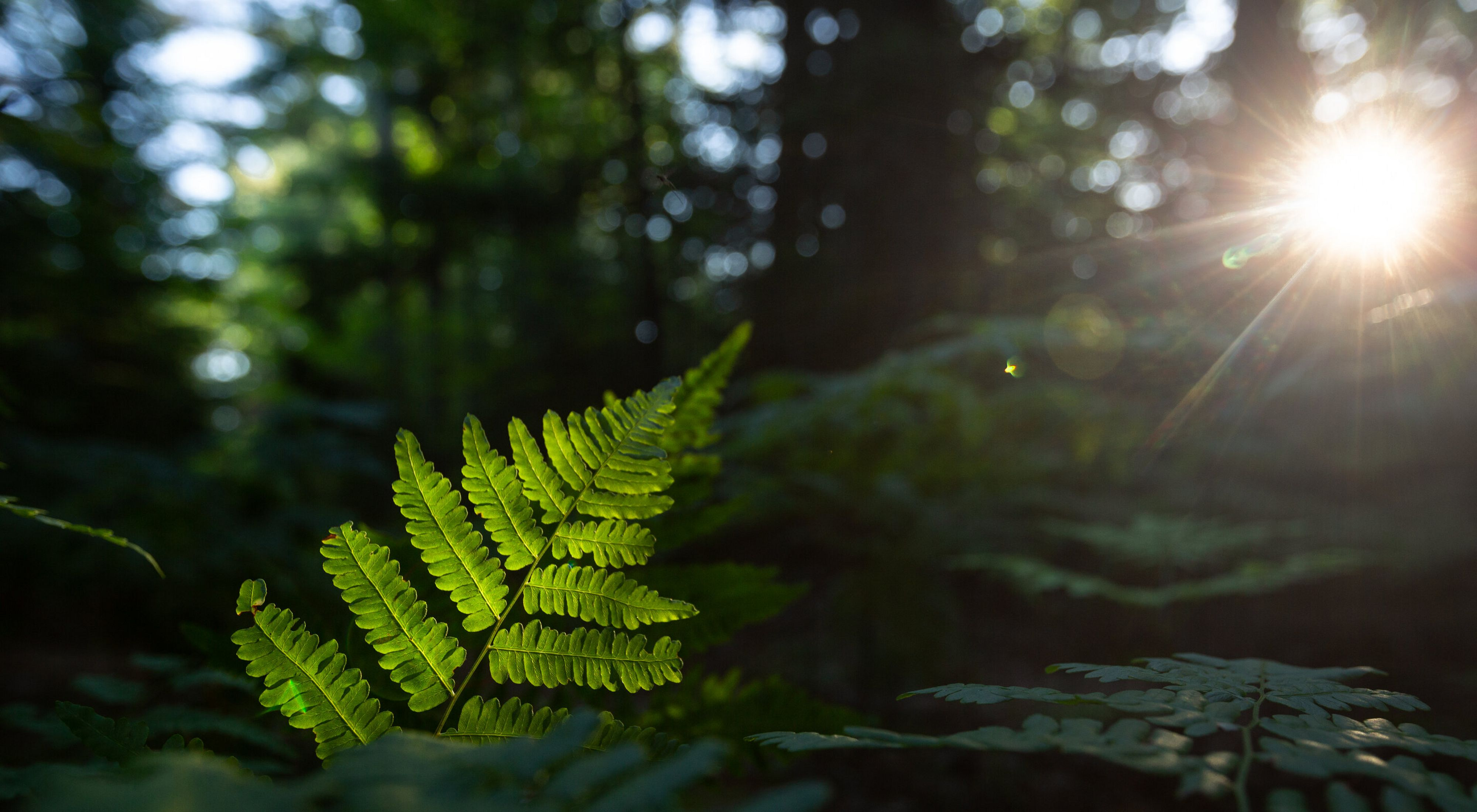 Ferns in the forest peek through sunlight at the McMahon Lake Preserve in northern Michigan.