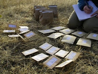 Paper packets of seeds laid out in rows in the grass in front of a kneeling researcher.