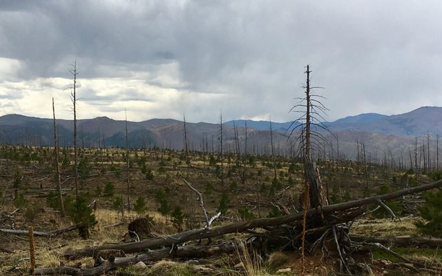The charred landscape still shows the devastation from the Hayman Fire.